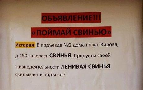Объявление «Поймай свинью» в многоквартирном доме порадовало приморцев