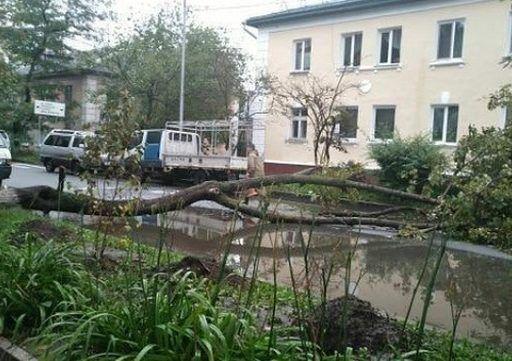 Огромное дерево рухнуло возле школы во Владивостоке