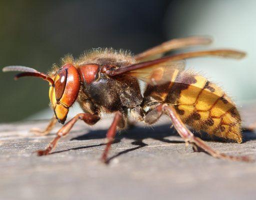 Опасные насекомые угрожали жителям Приморья