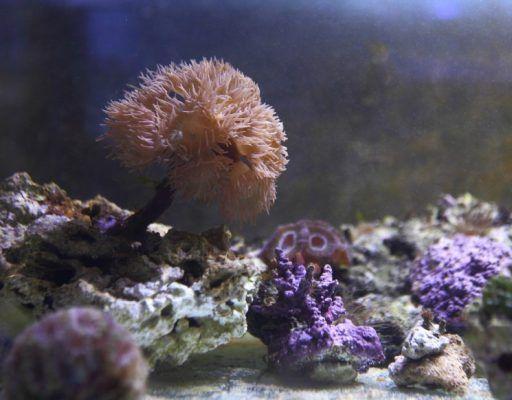 В Приморском океанариуме приступили к выращиванию кораллов