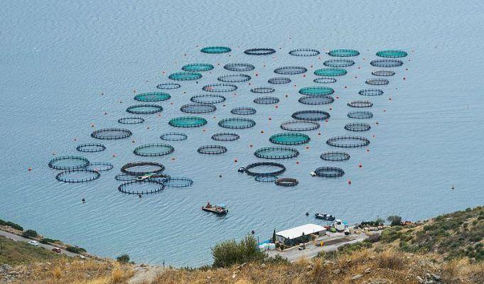 Правление Национального союза агростраховщиков согласовало единую методику расчета тарифов по страхованию аквакультуры