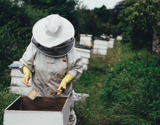 Отсутствие охранного статуса пчелы и вырубка липы: что мешает развиваться приморскому плеловодству