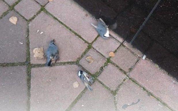 Город в Приморье завалило мёртвыми птицами