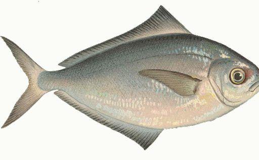 Несколько тонн масляной рыбы со ртутью обнаружили в Приморье