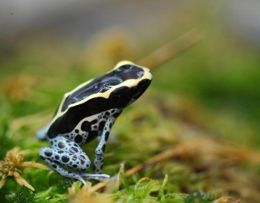 Ядовитые лягушки поселились в Приморском океанариуме