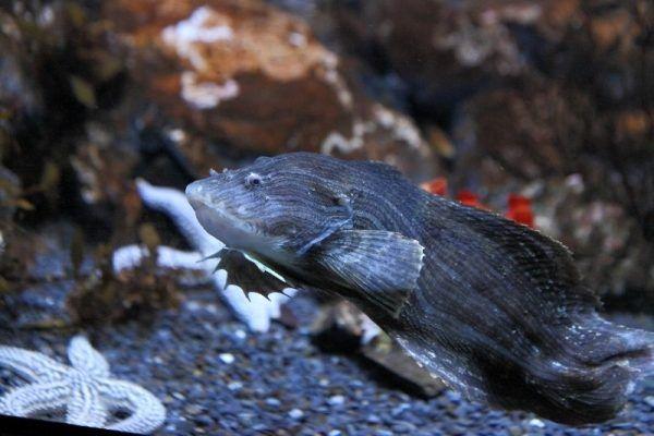 Удивительные морские слизни поселились в Приморском океанариуме
