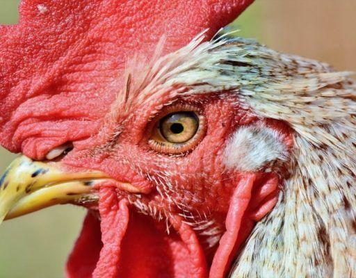 Десятки тонн тухлой курицы из Аргентины не пустили в Приморье