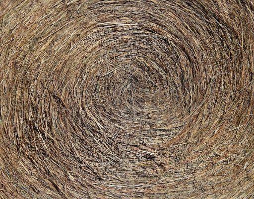 В Приморье арестовали более 12 тонн опасных кормов для животных