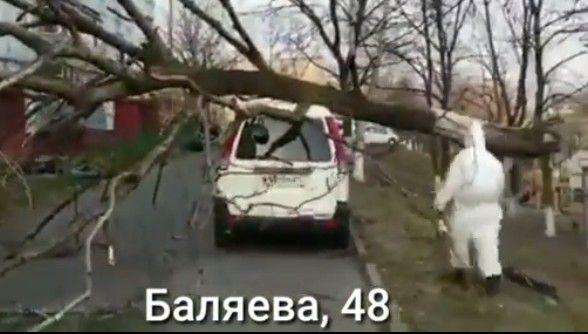 Мужчина в защитном костюме у рухнувшего дерева удивил Владивосток