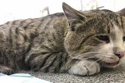 Печальная история: во Владивостоке сбили кота, в которого ранее стреляли