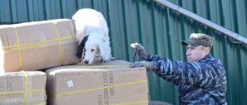 Таможня, кинолог, досмотр, служебная собака