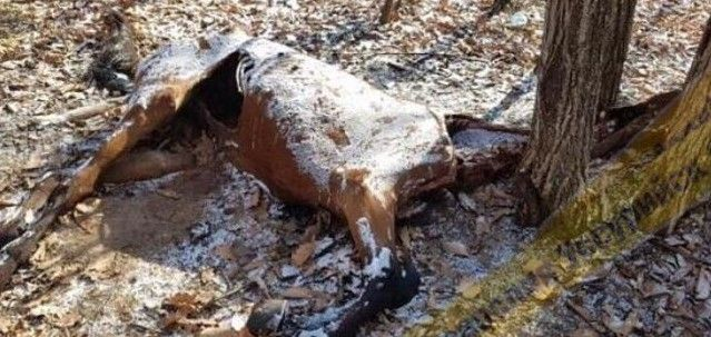 Мёртвая лошадь в лесу шокировала приморцев