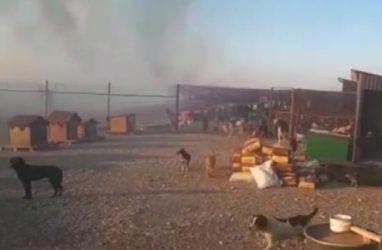 В Приморье чуть не сгорел приют для собак и кошек