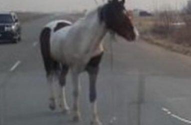 В Приморье потерявшаяся лошадь атаковала автомобили