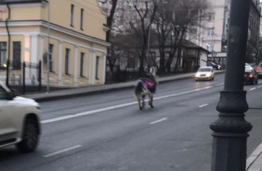 Одинокая лошадь посреди улицы удивила жителей Владивостока