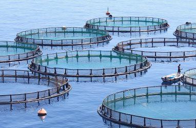 Власти Приморья сняли охранный статус с 20 тыс. га морской акватории