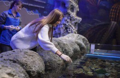 Посетители Приморского океанариума смогут сами кормить рыб