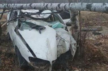 Дерево уничтожило автомобиль в Приморье