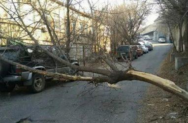Во Владивостоке КамАЗ зацепил дерево, оно рухнуло на легковушку