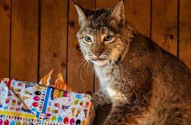 В Приморье объявили благотворительную акцию в поддержку зоопарка «Чудесный»