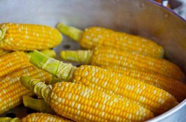 В Японию из Приморья чуть не отправили заражённую кукурузу