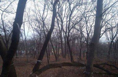 Владивостокской «Армаде» разрешили срубить более 2000 деревьев и кустарников для стройки в районе Академгородка