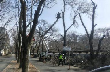 Почти 80 опасных деревьев срубили во Владивостоке