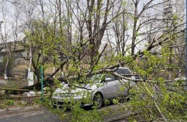 Во Владивостоке огромное дерево обрушилось на машину