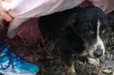 В Приморье похороненный пёс выбрался из могилы