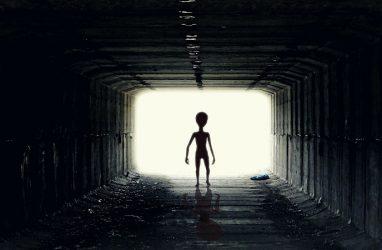 Во Владивостоке напомнила о себе «Служба депортации инопланетян»
