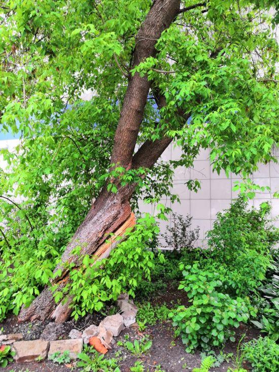 Дерево упало на налоговую