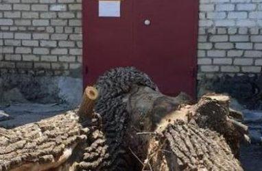 В Приморье жильцы дома спилили дерево и привезли его остатки к офису управляющей компании