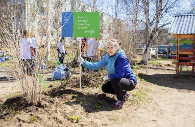 Волонтёры высадили во Врангеле более 250 саженцев деревьев и кустарников