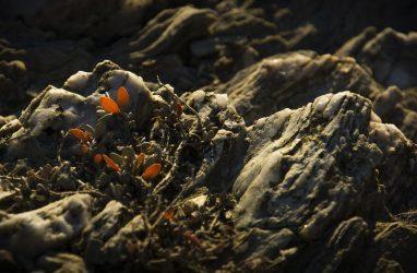 Клиент приморской компании захотел вулканический камень размером с Land Cruiser