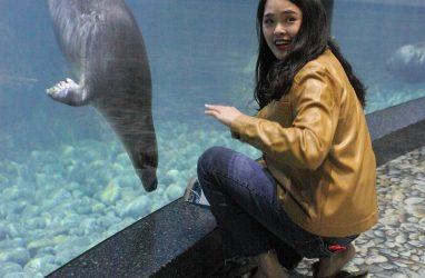 О Приморском океанариуме расскажет китайский блогер с миллионами подписчиков