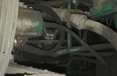 В Приморье маленький котёнок застрял в огромной дорожной машине