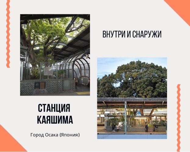 Железнодорожная станция вокруг дерева (Япония)