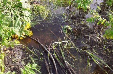 Ущерб из-за подтопления посевов в Приморье составил почти миллиард рублей