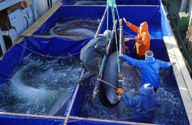 Всех узников «китовой тюрьмы» выпустили на свободу