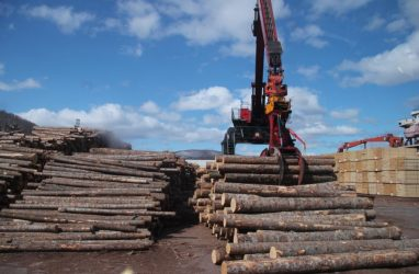 Из Приморья в Южную Корею незаконно вывезли 575 кубометров особо ценной древесины