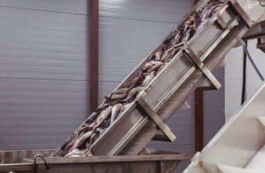 Россельхознадзор не исключил введения запрета на импорт китайских рыбы и морепродукции