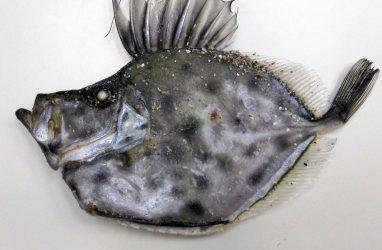 Холодовой шок поразил необычных рыб у берегов Приморья