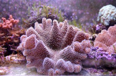 В Приморском океанариуме появились редкие виды мягких кораллов