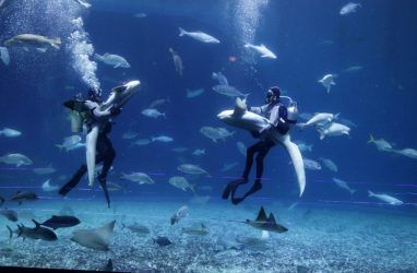 Вихрь танцев с акулами и скатами можно увидеть в Приморском океанариуме