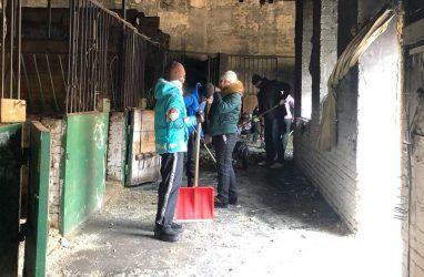 Лошади погибли при пожаре во Владивостоке: конюшня принимает помощь