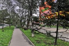 <strong>Во Владивостоке 3 сентября горожане наблюдают аномально сильный ветер, в результате которого по всему городу фиксируются разрушения</strong>