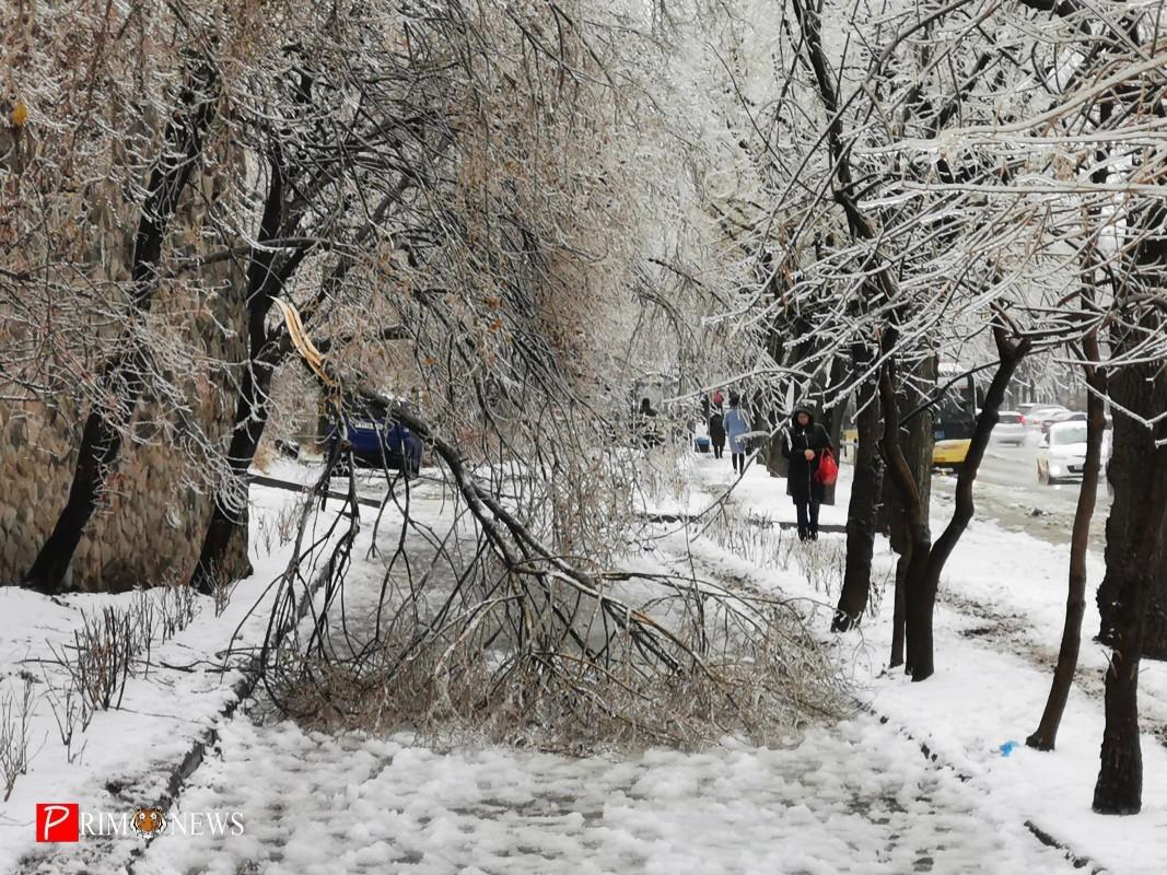 <strong>В ночь на 19 ноября погода во Владивостоке резко ухудшилась, уже утром жители города столкнулись с гололёдом, мокрым снегом и рухнувшими обледенелыми деревьями, перегородившими тротуары и проезжую часть</strong>