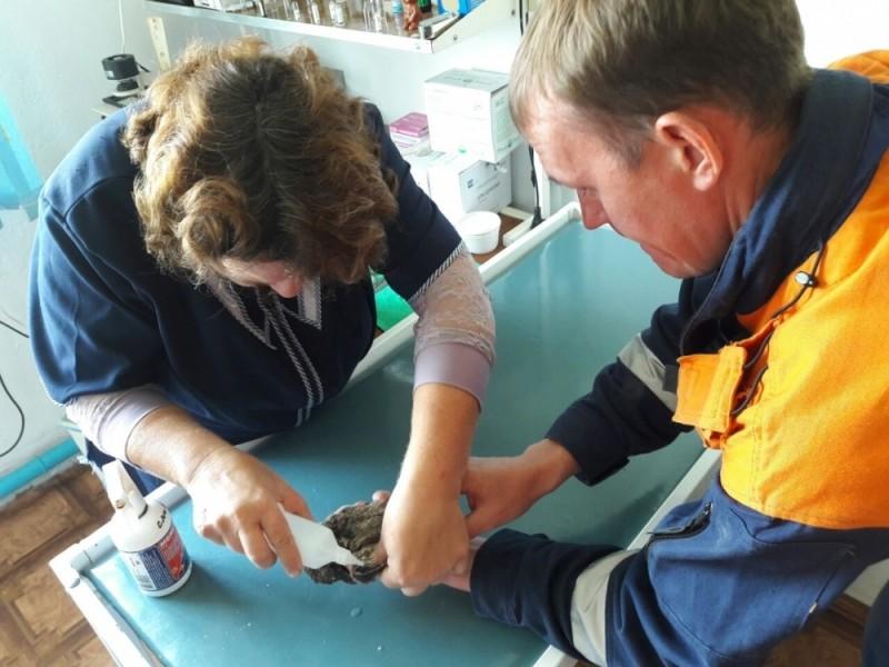 Птенца краснокнижного филина спасли в Приморье сотрудники МЧС