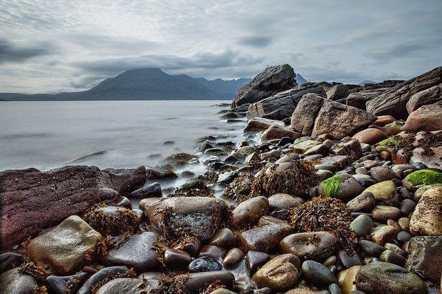 Водоросли, берег, море. Фото - pixabay