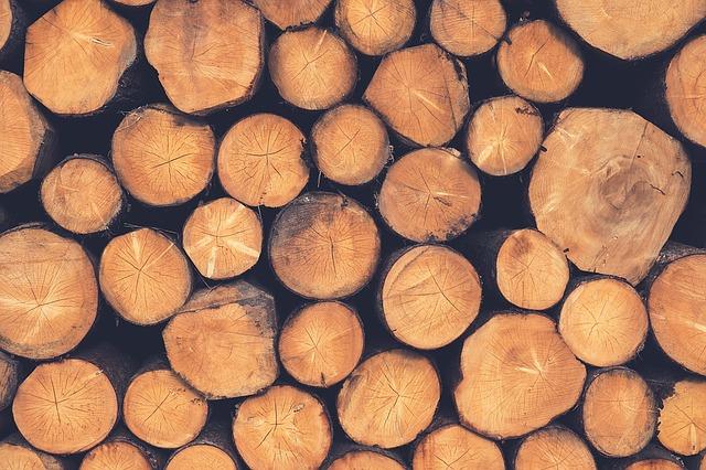 дрова, лес, дерево